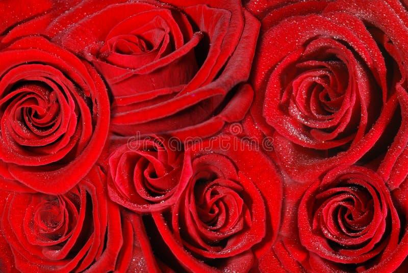 Priorità bassa rossa delle rose fotografie stock libere da diritti