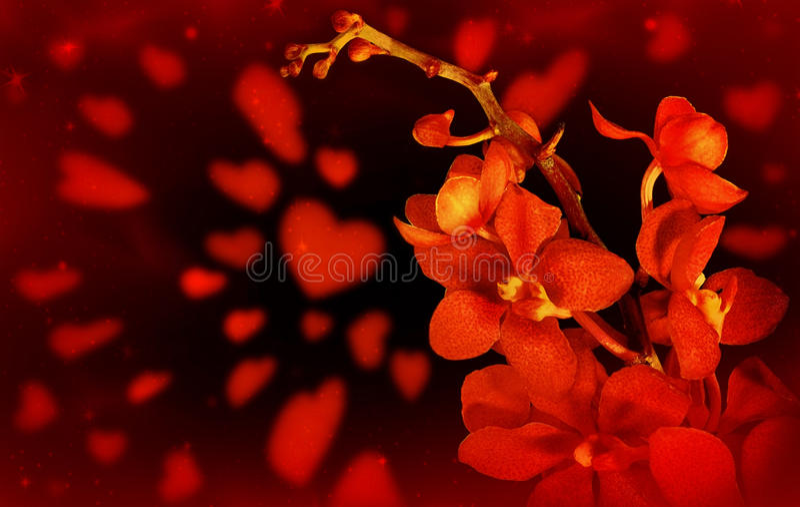 Priorità bassa rossa di amore dell'orchidea fotografie stock
