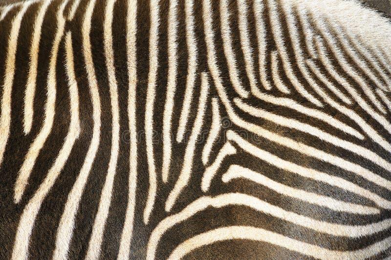 Priorità bassa a strisce di Grunge della zebra fotografia stock