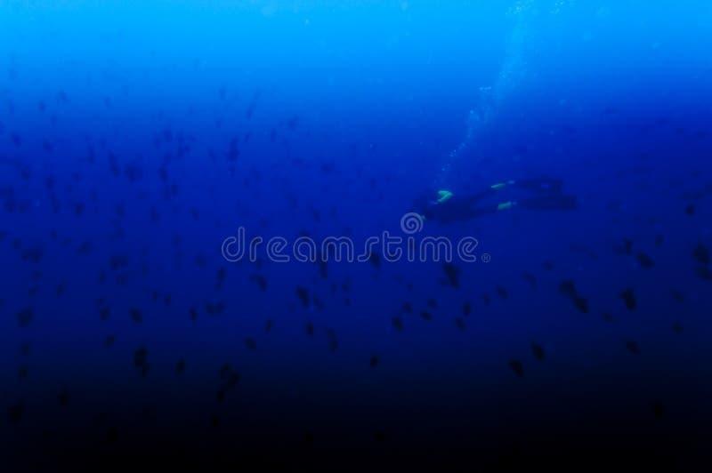 Priorità bassa subacquea fotografie stock