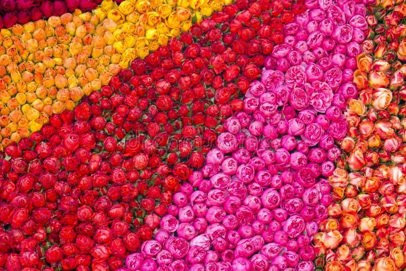 Priorità bassa variopinta delle rose fotografia stock libera da diritti