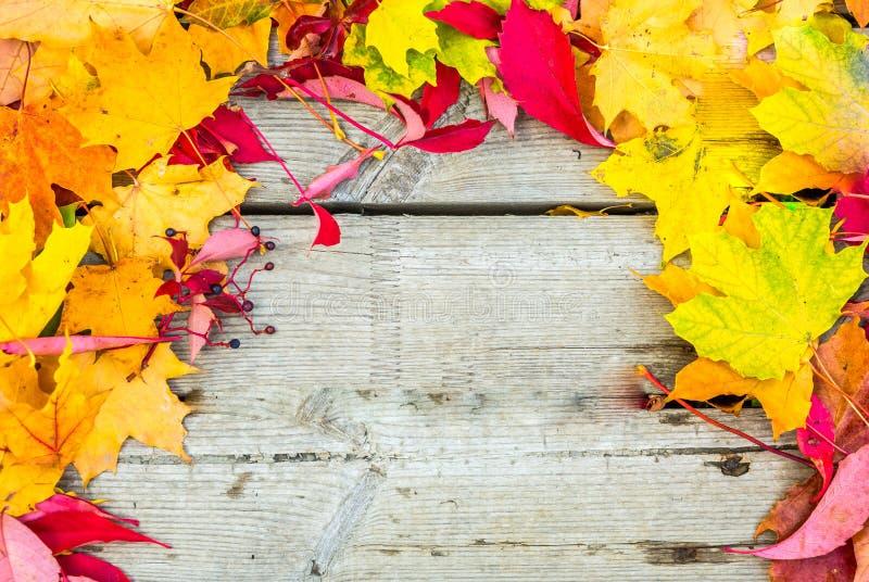 Priorità bassa variopinta di autunno foglie di autunno arancio e gialle con lo spazio della copia immagine stock