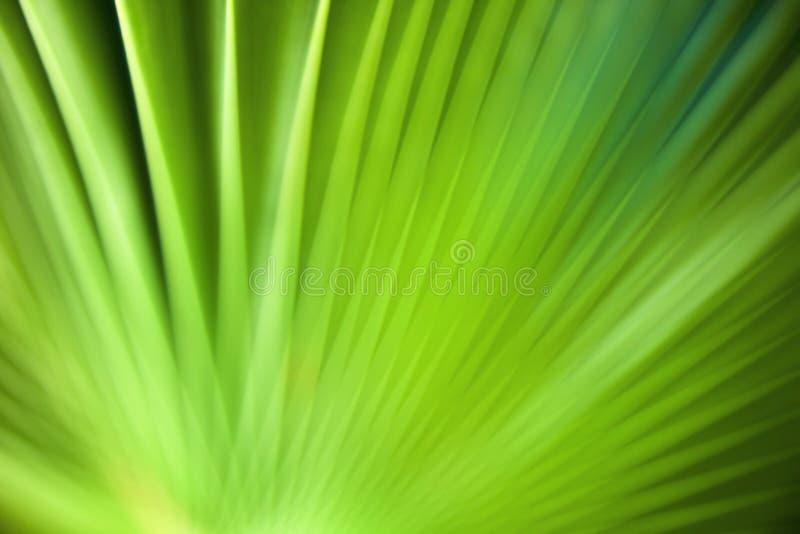 Priorità bassa verde astratta. fotografia stock