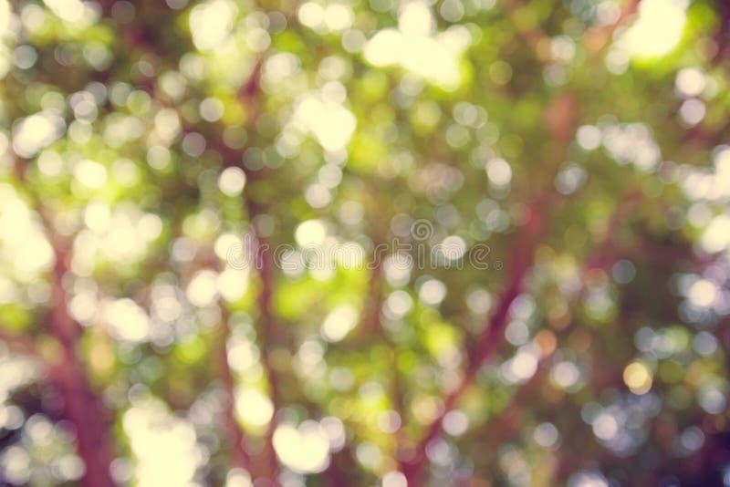 Priorità bassa verde astratta di Bokeh fotografie stock
