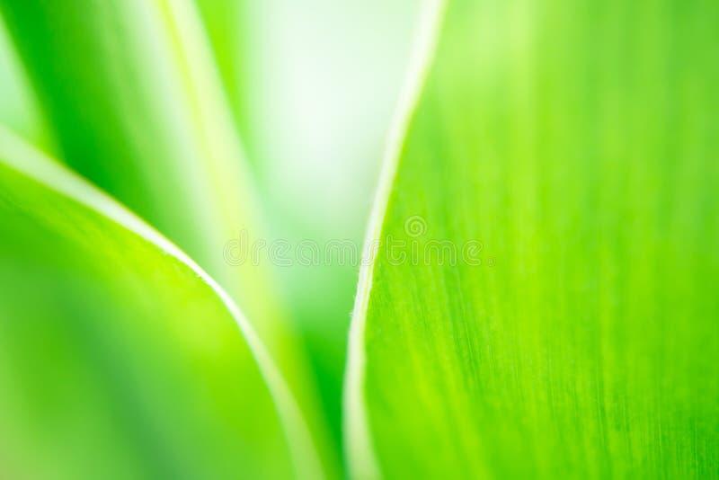 Priorità bassa verde del foglio fotografia stock libera da diritti
