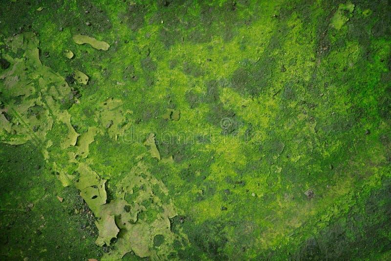 Priorità bassa verde di Grunge fotografia stock