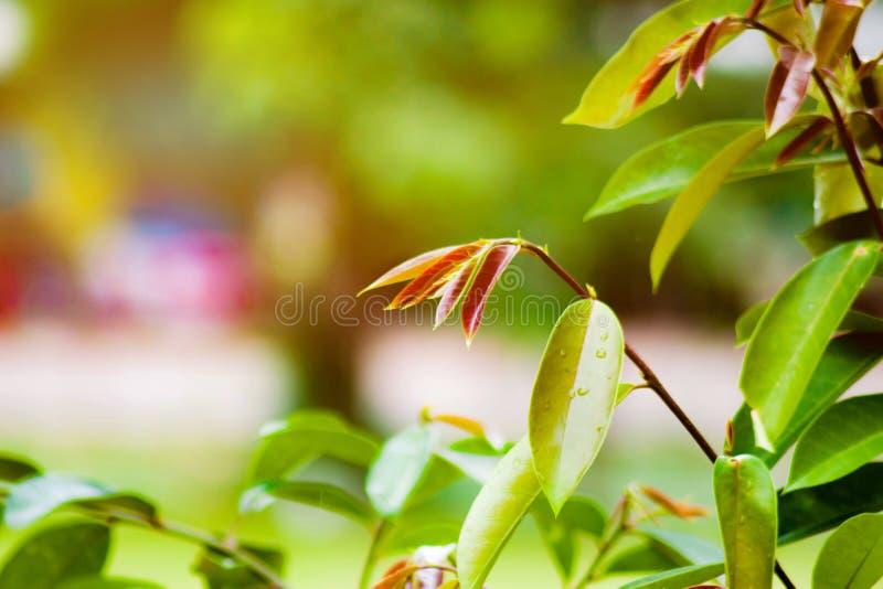 Priorità bassa verde naturale fotografie stock libere da diritti