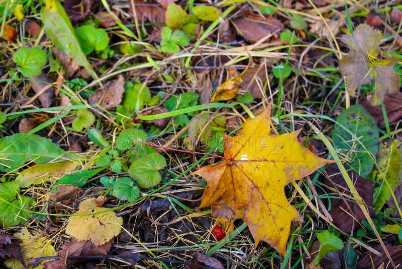 Priorit? bassa di autunno Foglia caduta sulla terra, erba, fotografia stock libera da diritti