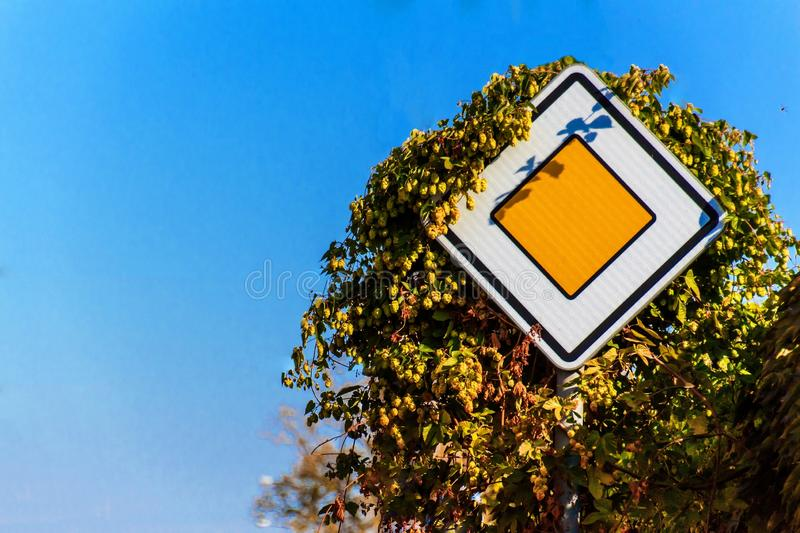 Priority road, european traffic sign against the clear blue sky. Traffic sign covered with hops. stock images