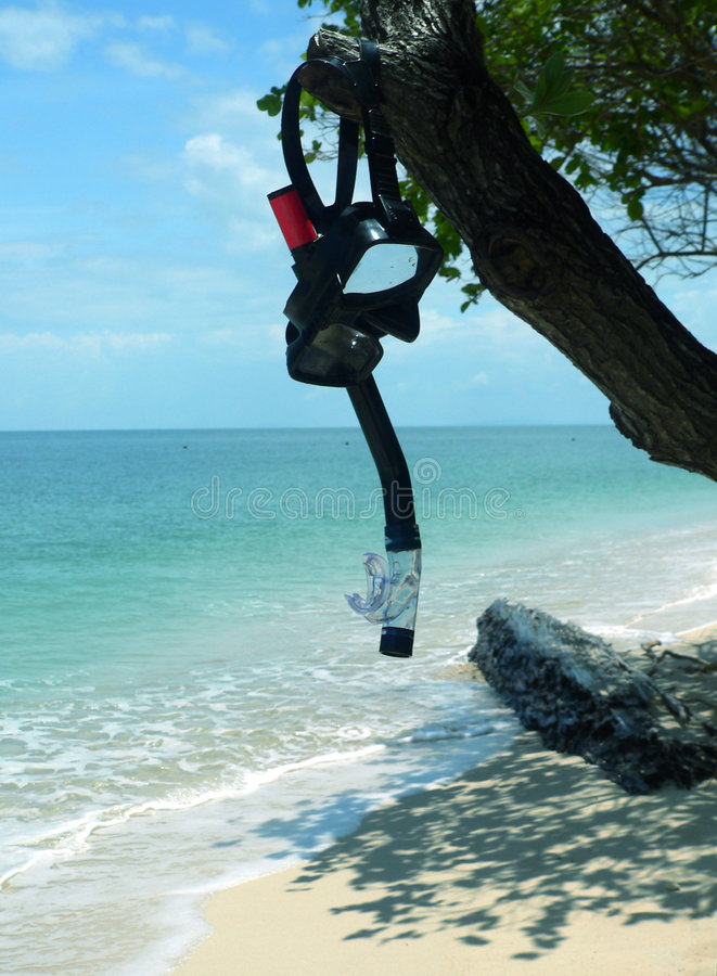 Download Prise D'air Et Masque Sur L'arbre Image stock - Image du hawaï, côte: 732131