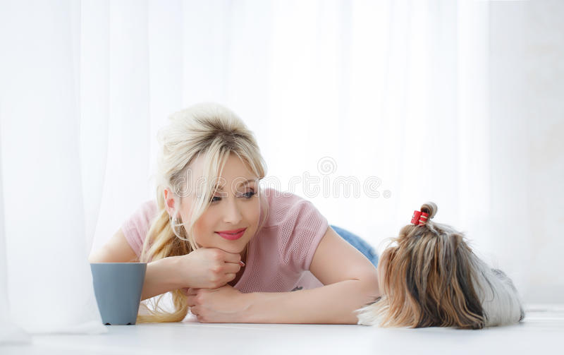 Prises de fille sur des mains Yorkshire Terrier photo libre de droits