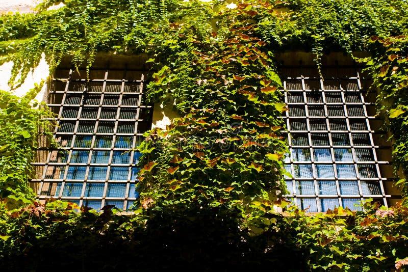 Prison cell windows stock image