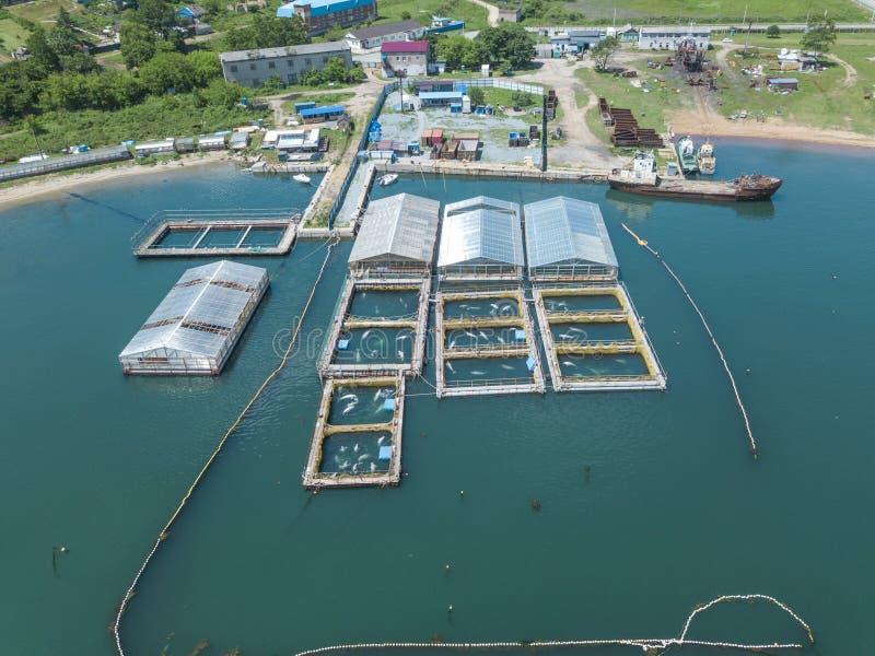 Prison de baleine pour des dauphins et des épaulards images libres de droits