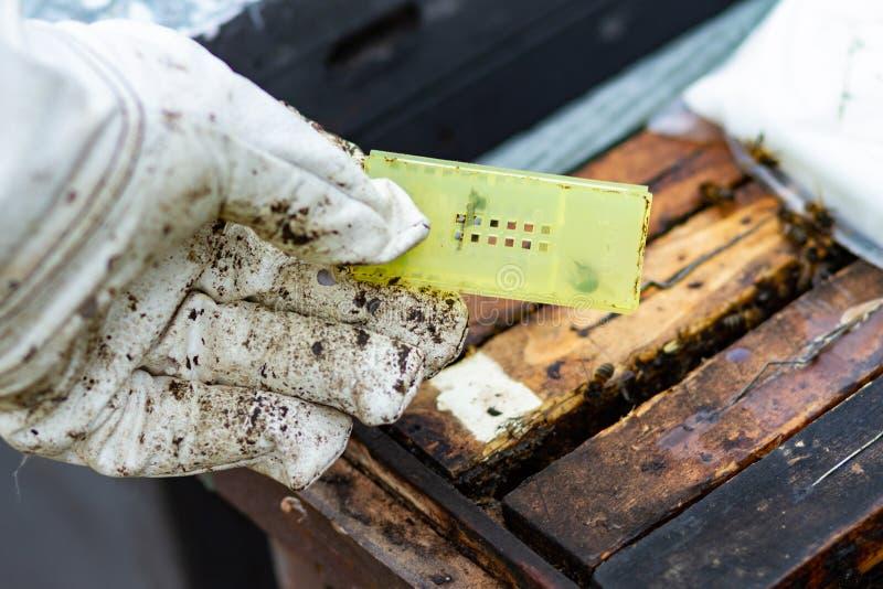 Prison de reine des abeilles pour la ruche photos libres de droits