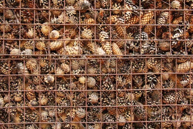Prison et emprisonnement des cônes derrière des barres Fond de pin photo stock