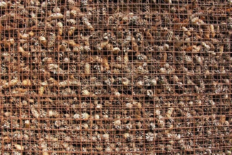 Prison et emprisonnement des cônes derrière des barres Fond de pin photographie stock