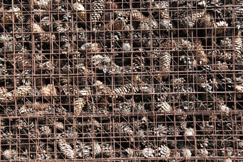 Prison et emprisonnement des cônes derrière des barres Fond de pin image stock