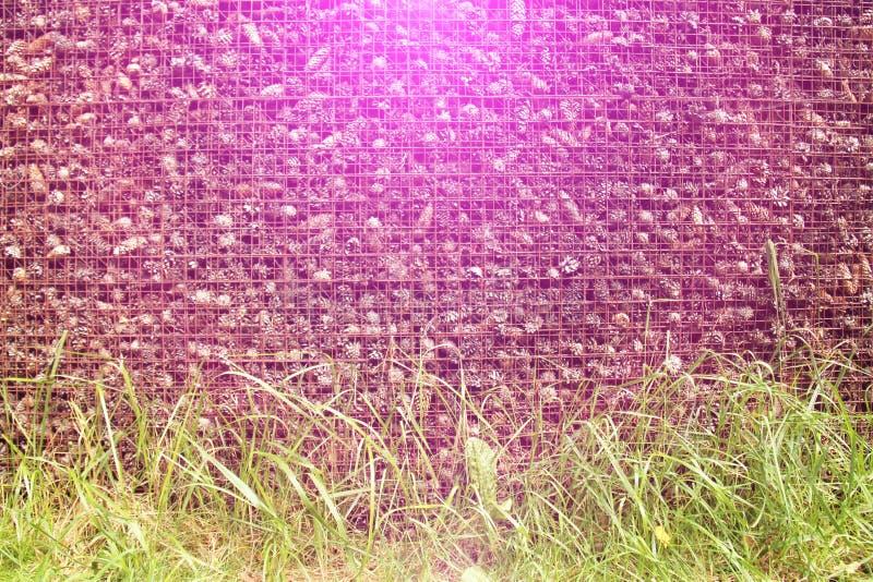 Prison et emprisonnement des cônes derrière des barres Fond de pin photos libres de droits