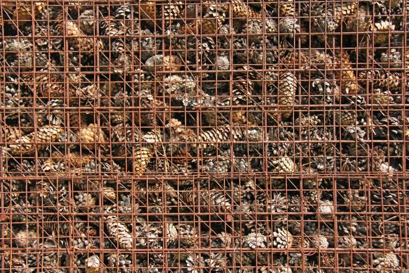 Prison et emprisonnement des cônes derrière des barres Fond de pin images libres de droits