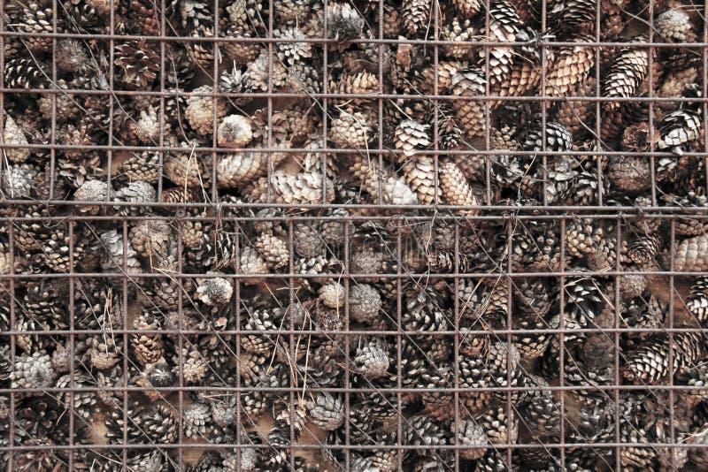 Prison et emprisonnement des cônes derrière des barres Fond de pin photographie stock libre de droits