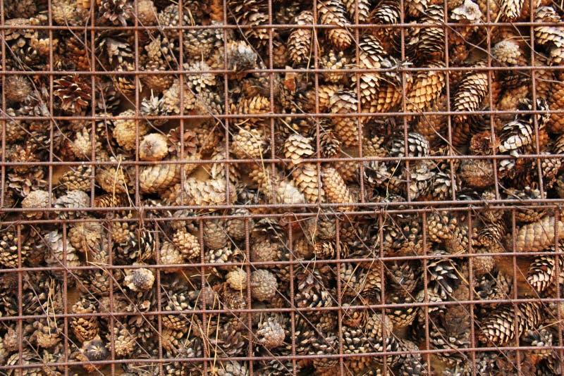 Prison et emprisonnement des cônes derrière des barres Fond de pin image libre de droits
