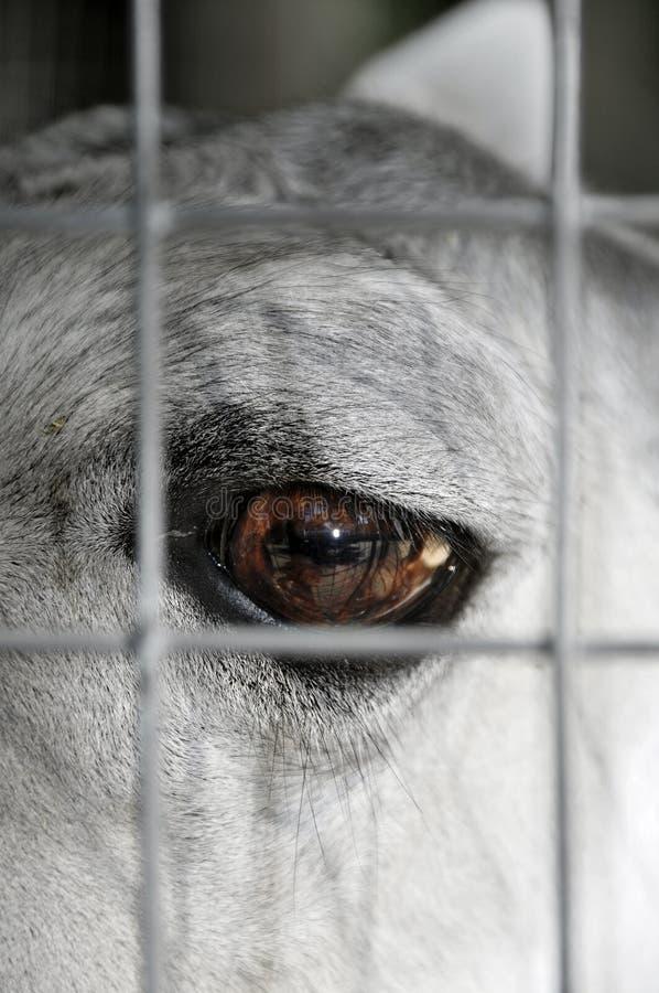 Download Prisoner animal stock photo. Image of caged, torture - 17547126