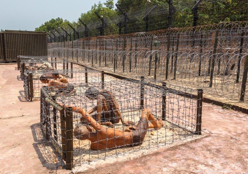 Prisonniers dans une cage photo stock