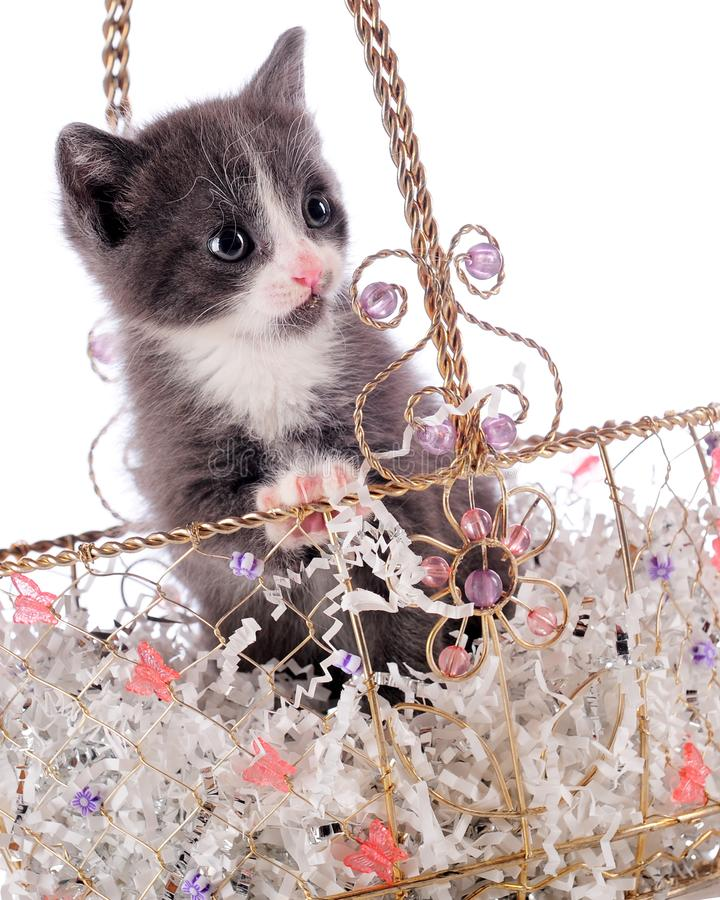 Download Prissy Kitty stock photo. Image of flowers, cute, gold - 15612146