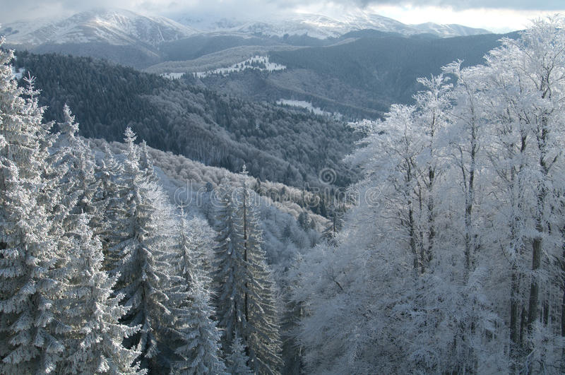 Download Pristine winter scenery stock photo. Image of clean, refreshing - 10357958