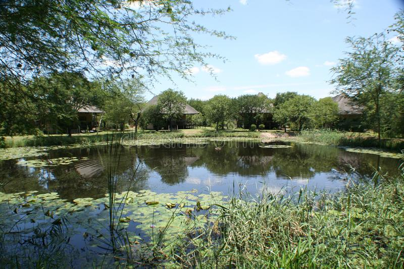 Privé Spel Reseave in Zuid-Afrika stock afbeeldingen