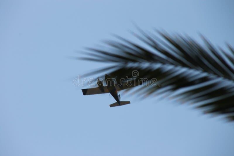 Privé vliegtuig die onderaan palm drie tak vliegen royalty-vrije stock afbeelding