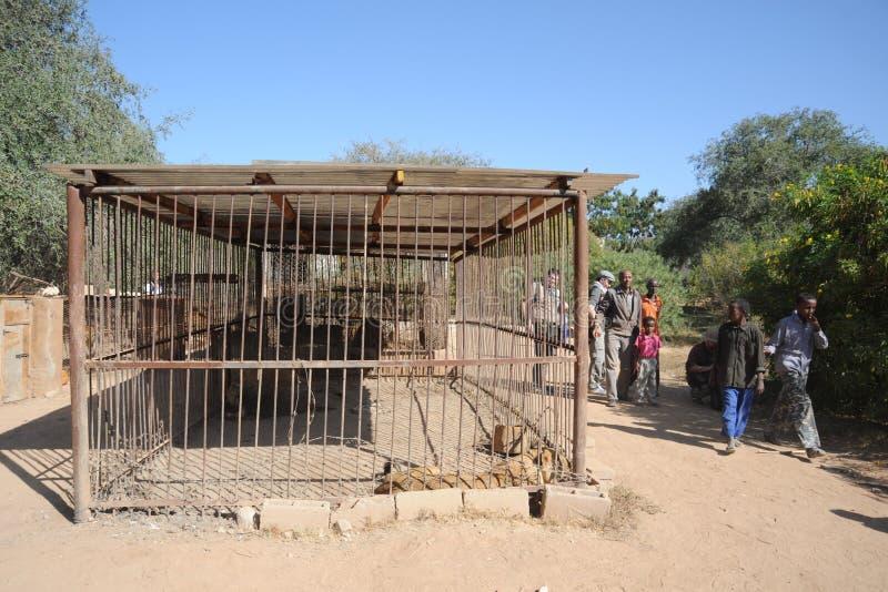 Privat zoo i Hargeisa arkivfoto
