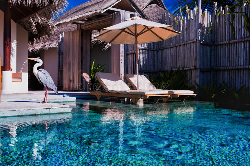 Download Private Pool And A Bird In Luxurious Villa Stock Image - Image: 22608267