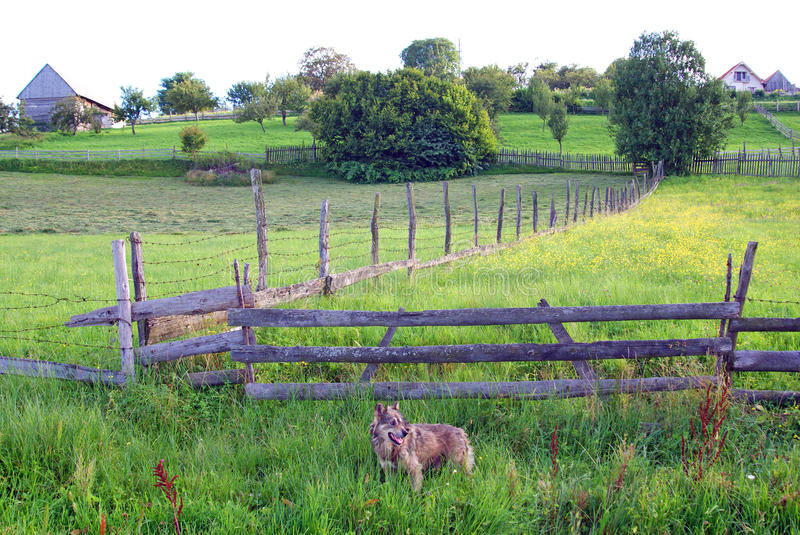 Private property protected by dogs stock photo