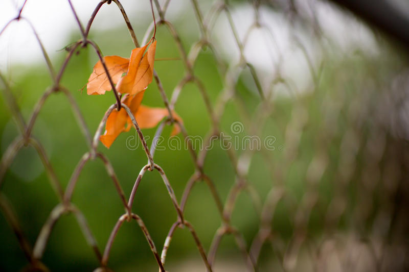 Private property, silver chain link fence pattern with tree on background. stock photos