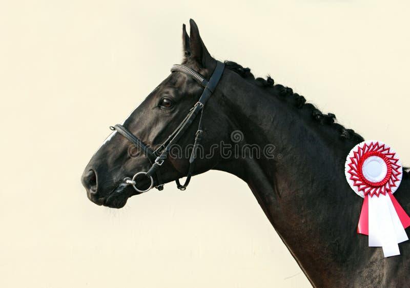 Prizewinning häst för svart lopp arkivfoto