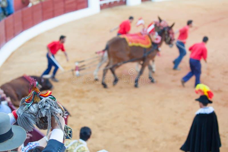 Prizewinning tjurfäktare royaltyfria bilder