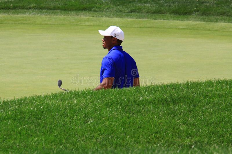 Pro golfer Tiger Woods. Tiger Woods studies the putting green after his chips on royalty free stock photo