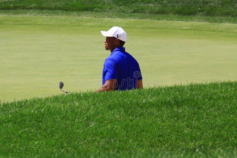 Pro golfista Tiger Woods zdjęcie royalty free