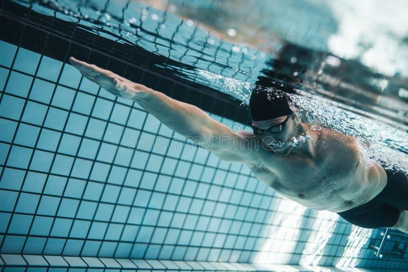 Pro-simmare som öva i simbassäng royaltyfri foto