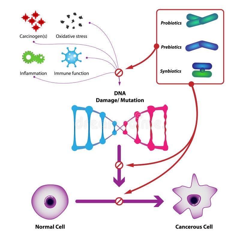 Probiotic bacteriën verhinderen de schade en de verandering van DNA royalty-vrije illustratie