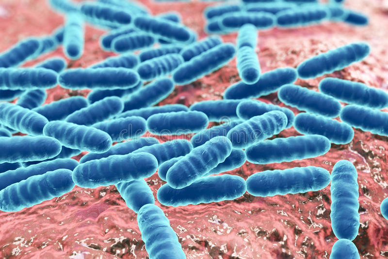 Probiotic bakterieLactobacillus royaltyfri fotografi