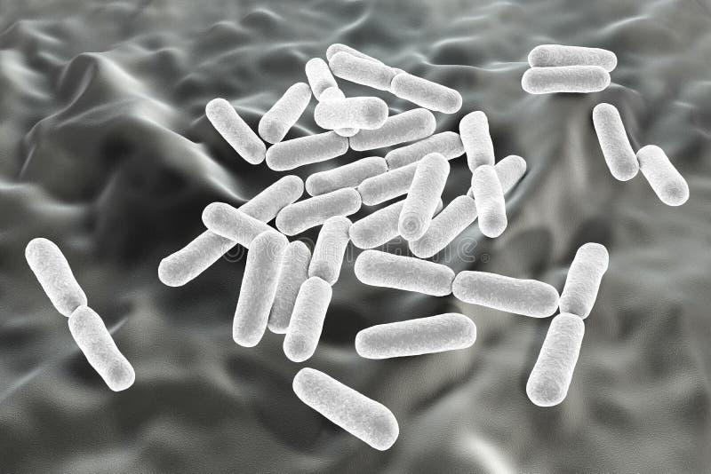 Probiotic Bakterien Bazillus clausii vektor abbildung