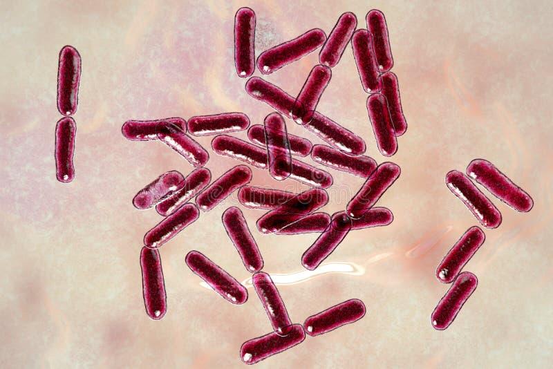 Probiotic Bakterien Bazillus clausii lizenzfreie abbildung