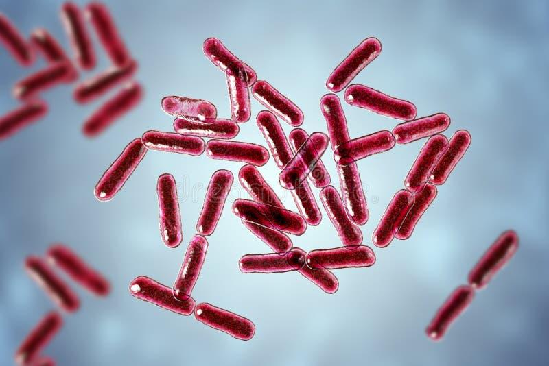 Probiotic Bakterien Bazillus clausii stock abbildung