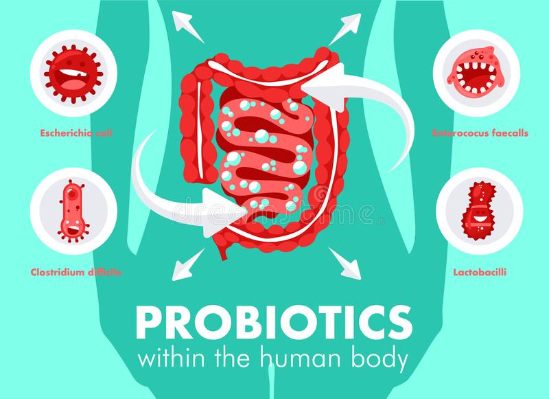 Probiotici nel corpo umano illustrazione vettoriale