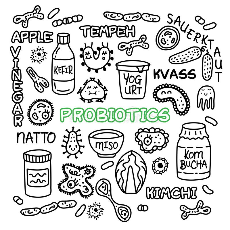 Probiotics细菌食物医学集合食道细菌植物群 向量例证