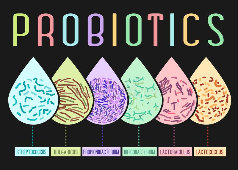 Probiotics dactylographie l'affiche illustration de vecteur