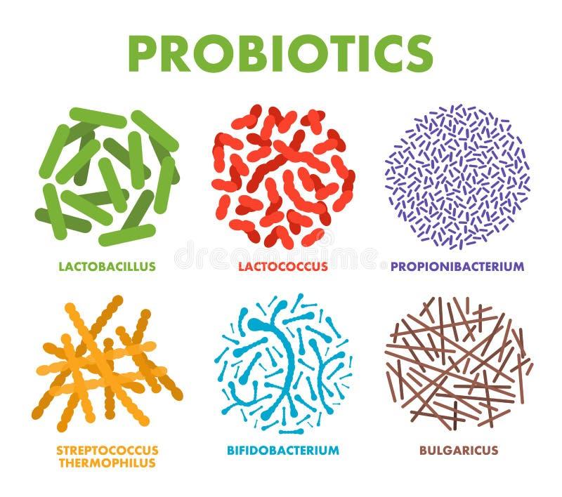 Probiotics. Good bacteria and microorganisms for human health. Microscopic probiotics, good bacterial flora vector illustration