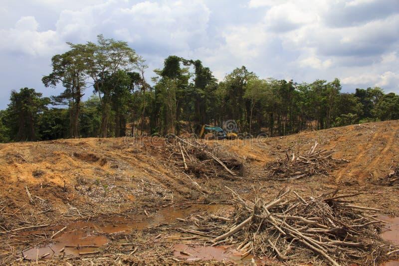 Problema ambiental de la tala de árboles foto de archivo